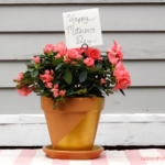 DIY Dipped Flower Pots for the Procrastinating Gifter
