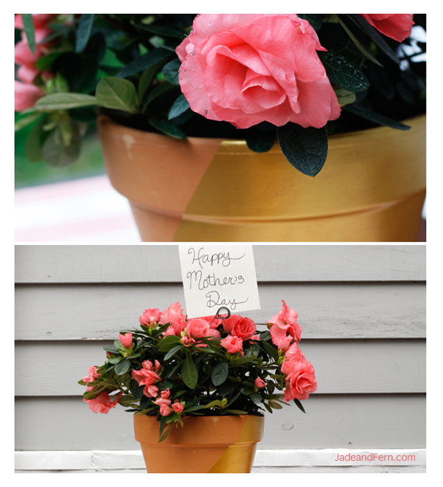 DIY Dipped Flower Pot | Jade and Fern