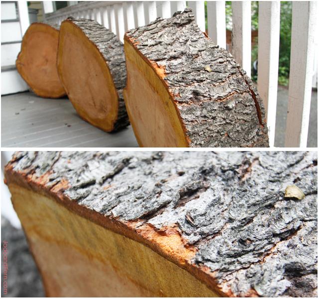 Tree Slices || Jade and Fern