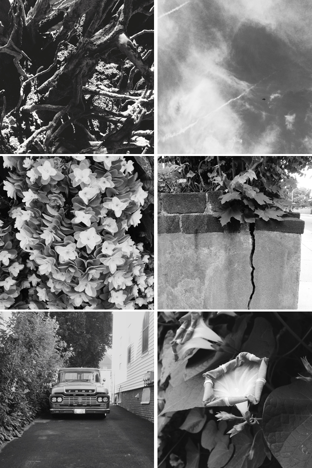 Snaps in Black and White || Jade and Fern