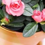 DIY Gold-Dipped Flower Pot || Jade and Fern