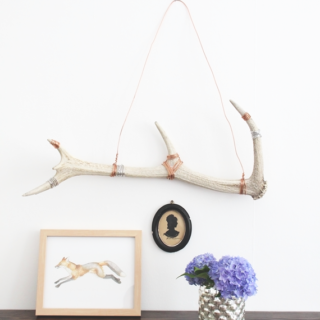 How to Clean and Display Antler Sheds || Idle Hands Awake
