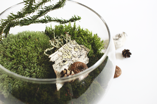 DIY Found Moss Terrarium by Idle Hands Awake