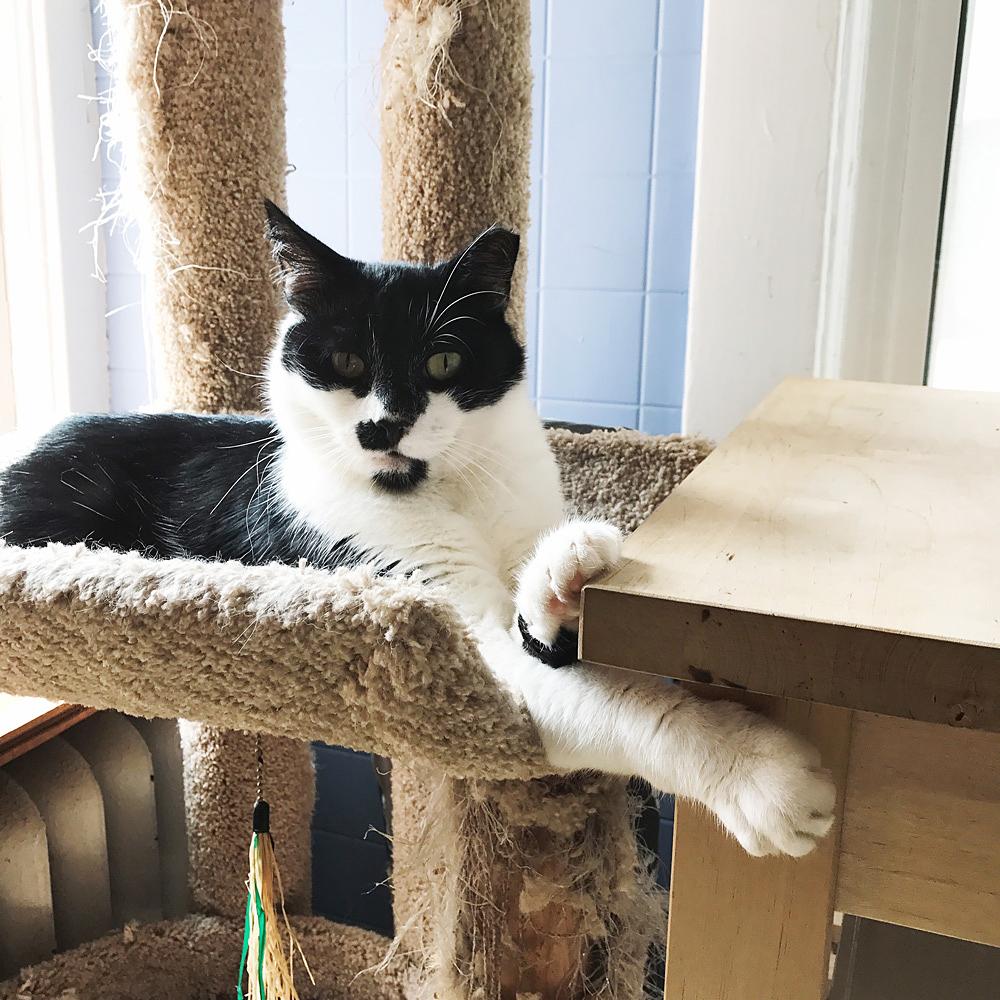 Aemon the Cat @idlehandsawake
